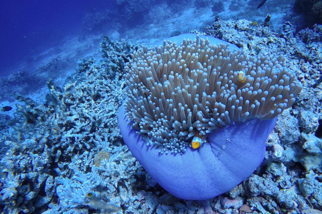 Tauchen Togian Inseln Bomba Divers