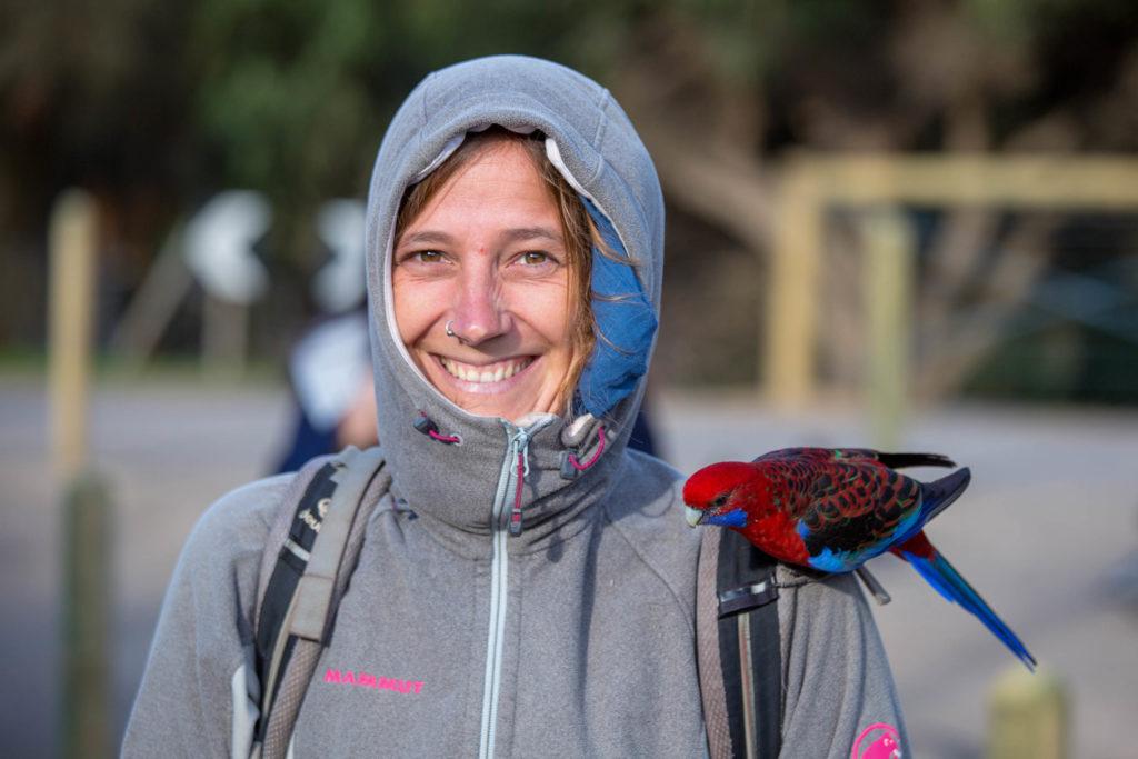 Great Ocean Road - Bunte zutraulische Papageien