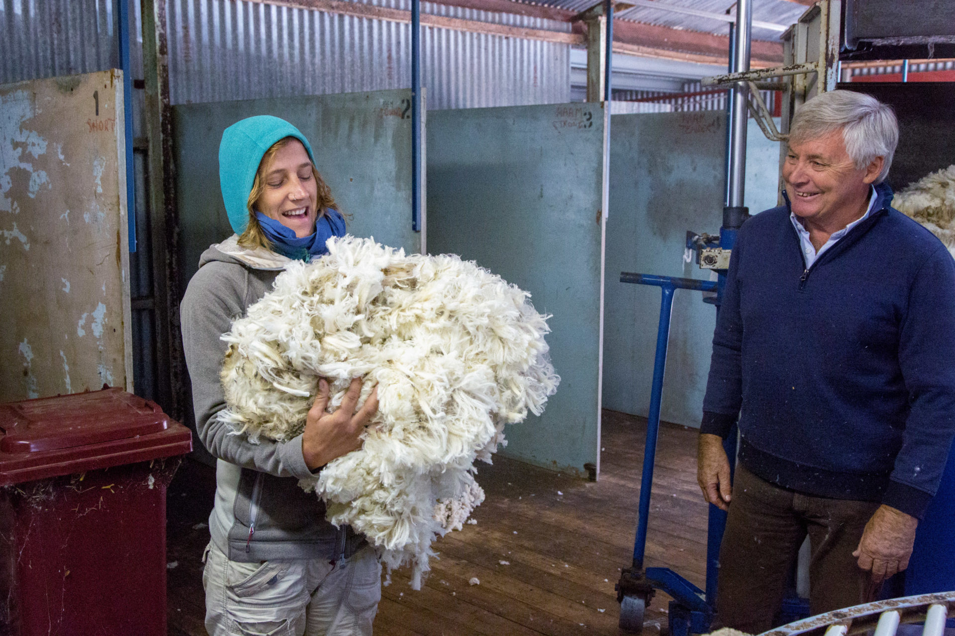 Schafe scheren in Australien – Ein Selbstversuch