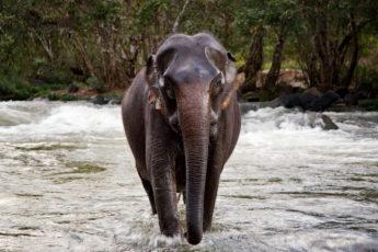 Elefantenwaschen Tad Lo