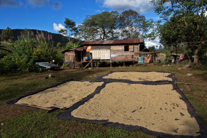 Kaffeeplantage Tad Lo