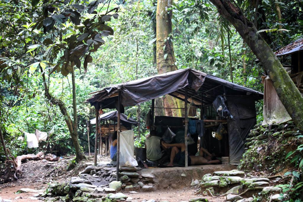 Dschungel Trekking in Bukit Lawang