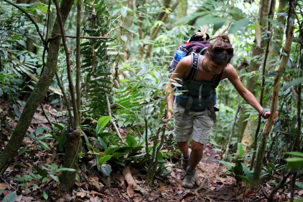 Dschungel Trekking in Bukit Lawang - Leuser Nationalpark - Sumatra, Indonesien