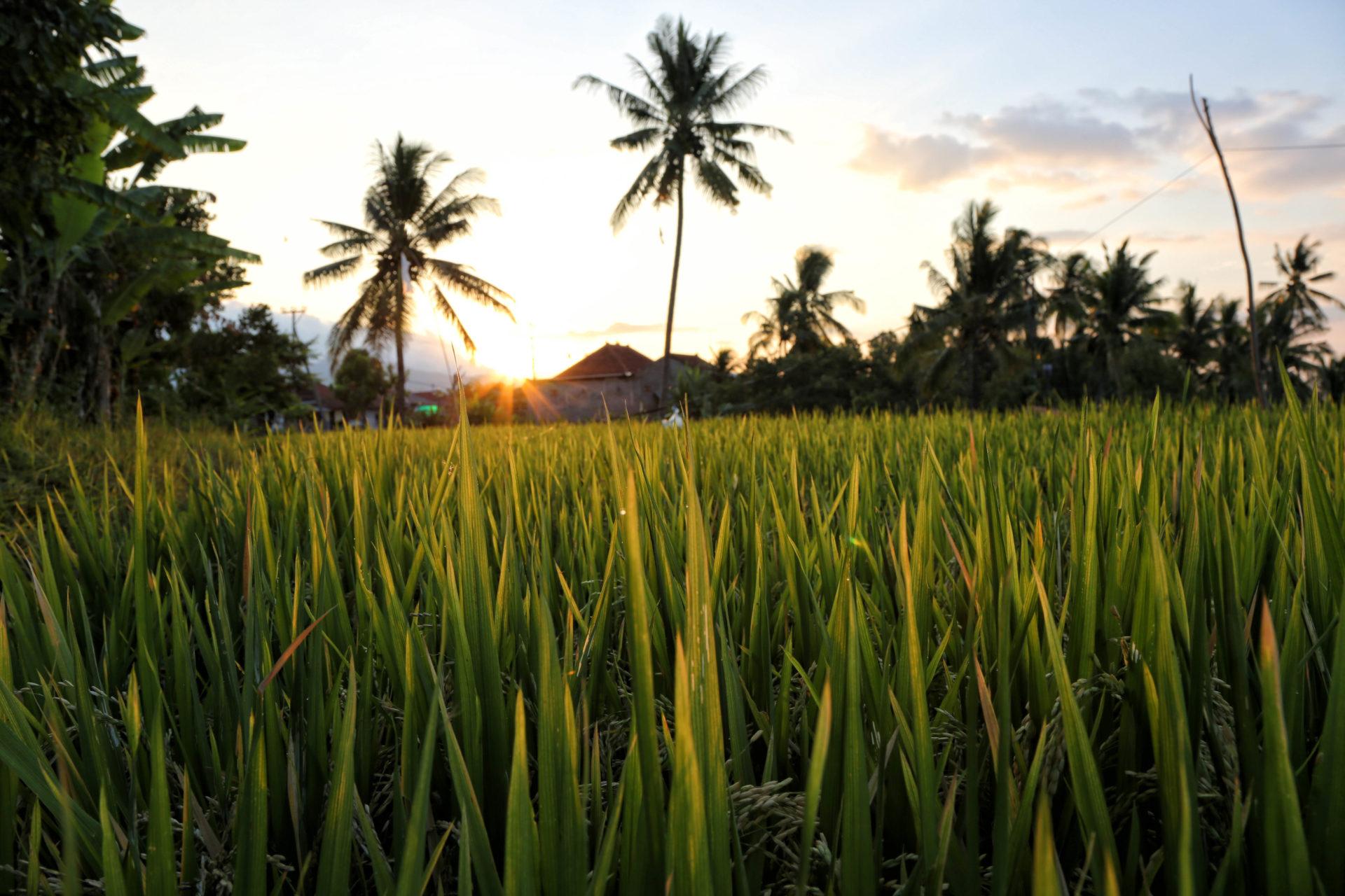 Eine Oase in den Reisfeldern – Unser Homestay in Mayong