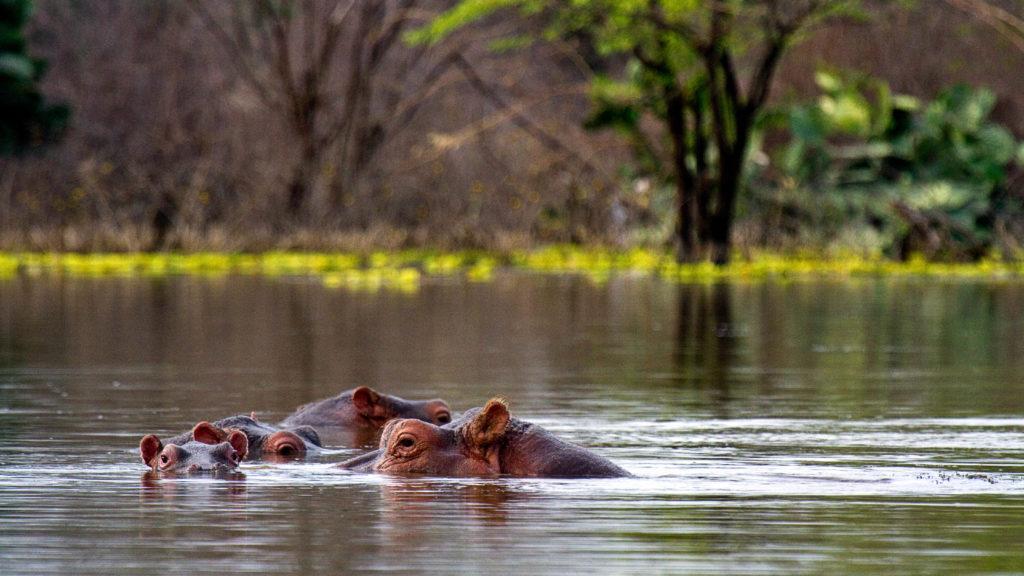 Reiseziele August - Kenia - Lake Baringo
