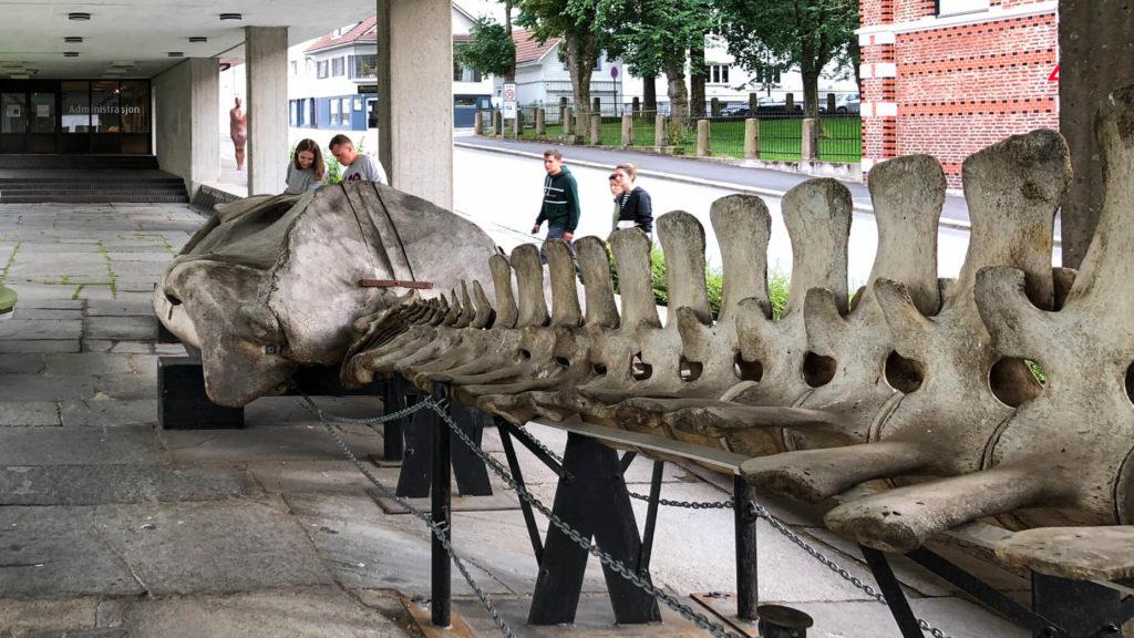 Walskelett mit Kopf in Stavanger