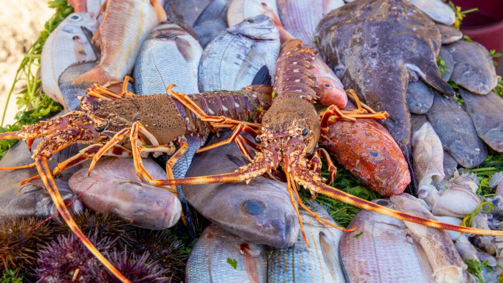 firsch gefangener Fisch und Meeresfrüchte in Essaouira - Marokko