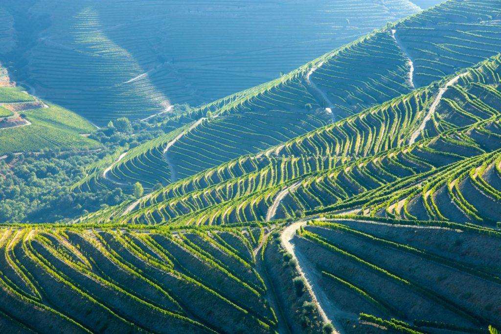 Weinbau Weinberge im frühen Sonnenlicht bei Pinhão