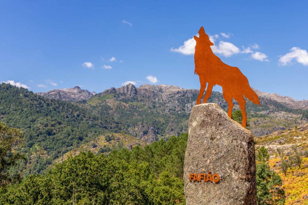 Wolf im Nationalpark Peneda Gerês Nordportugal