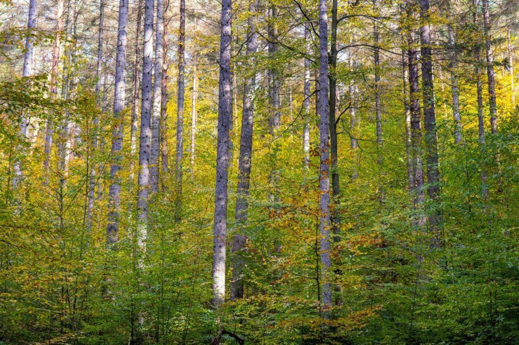Dichter Wald im Nationalpark Sächsische Schweiz