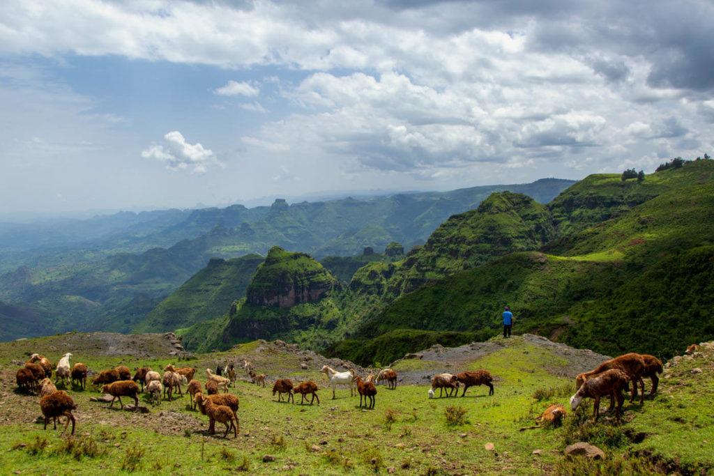 Simien Mountains - Äthiopien Reisebericht in Bildern