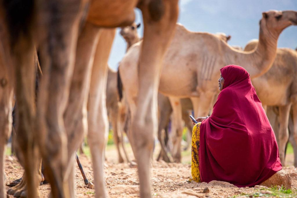 Kamelmarkt in Babile 20km östlich von Harar - Äthiopien Reisebericht in Bildern