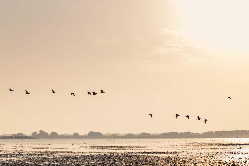 Zugvögel zum Sonnenaufgang im Donaudelta - Rumänien Roadtrip mit dem Wohnmobil